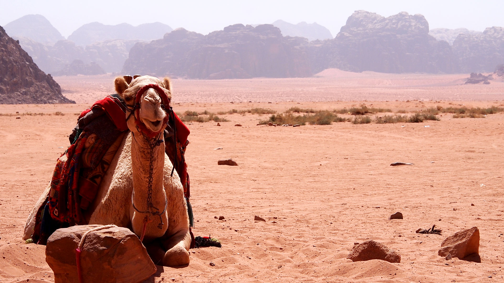 Living the Bedouin Way In Wadi Rum